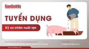 tuyển dụng kĩ sư nuôi lợn